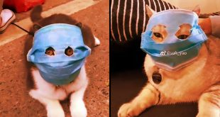 cats-china-face-masks-deadly-virus